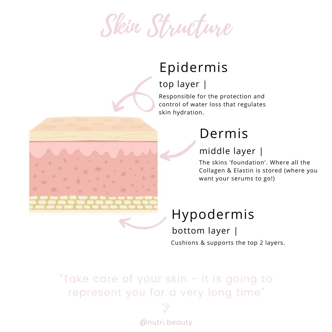 Skin Diagram - nutri beauty